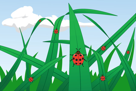 Ladybirds on a grass, illustration Vector