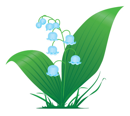 bluebells: Lily of the valley, illustration