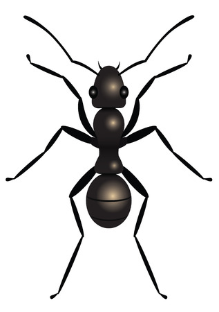 ant: Black ant, top view, illustration
