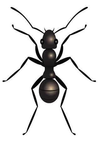 hormiga: Negro hormiga, la vista superior, la ilustraci�n