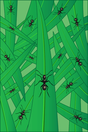 herbage: Ants on a grass, illustration Illustration