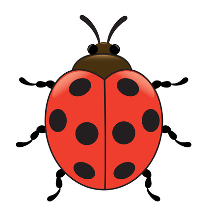 hexapod: Ladybird, insect, top view, illustration Illustration