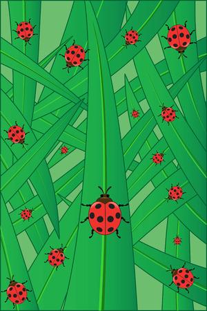 testa: Ladybirds on a grass, illustration