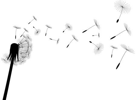 Diente de León de golpe sobre fondo blanco, ilustración