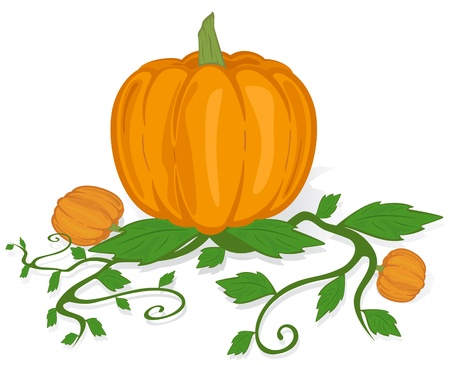 cucurbit: The big ripe pumpkin on a white background, illustration. Illustration