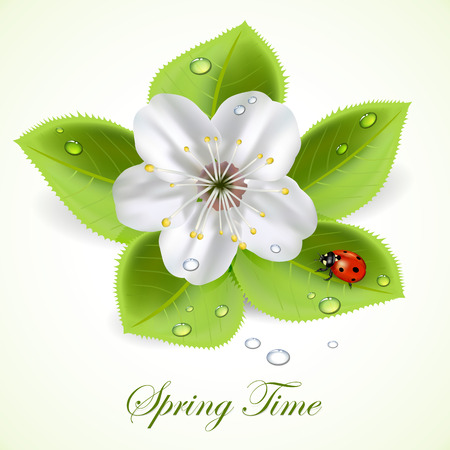 Flower and foliage with drops and ladybug, illustration  Vector