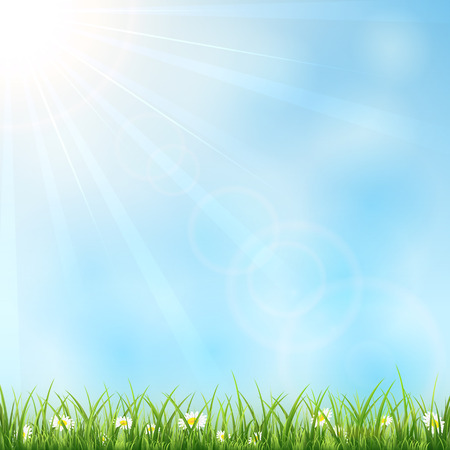 sun illustration: Nature background with grass, flowers and Sun, illustration  Illustration
