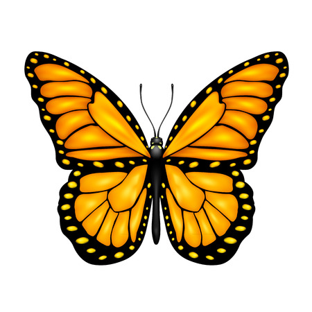 butterfly isolated: Orange butterfly isolated on a white background, illustration