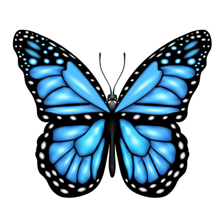 Blue butterfly isolated on a white background, illustration