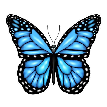 mariposa azul: Mariposa azul aislado en un fondo blanco, ilustración Vectores