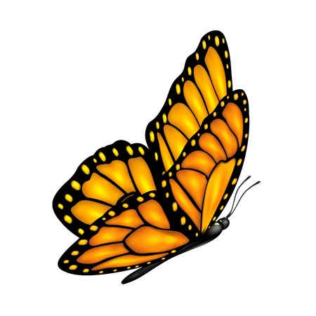 Flying orange butterfly and shadow isolated on a white background, illustration