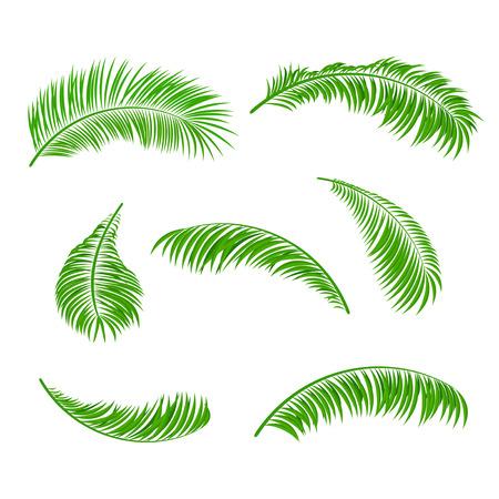 Palm bladeren geïsoleerd op een witte achtergrond, illustratie Stock Illustratie