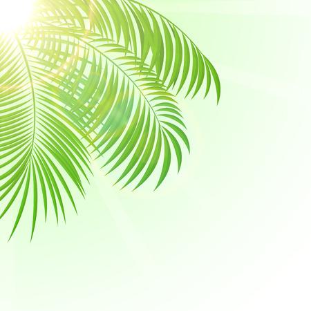 Palm Blätter mit Sun auf Himmel Hintergrund, Illustration