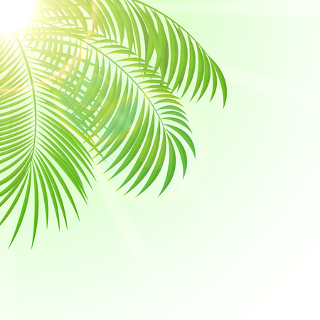 frond: Palm leaves with Sun on sky background, illustration