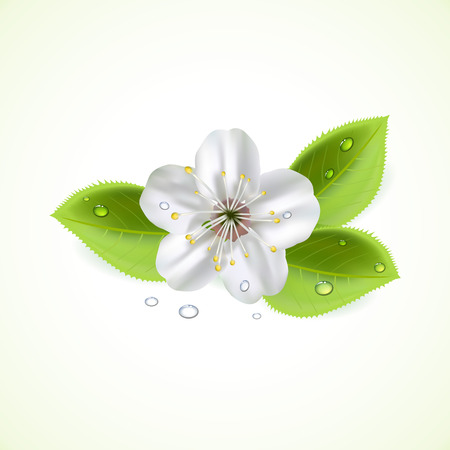 White flower and foliage with drops, illustration  Vector