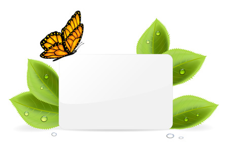 Paper card, butterfly and foliage with water drops, illustration  Vector