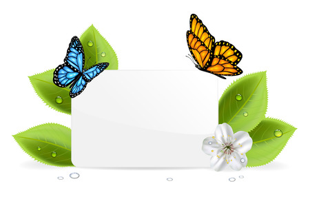 Paper card, butterflies and flower with water drops, illustration  Vector