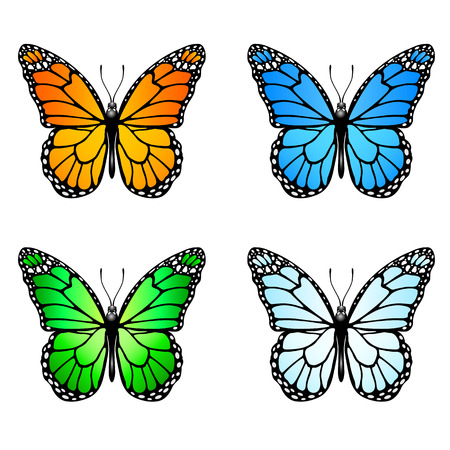 monarch butterfly: Set of four colored butterflies isolated on white background, illustration