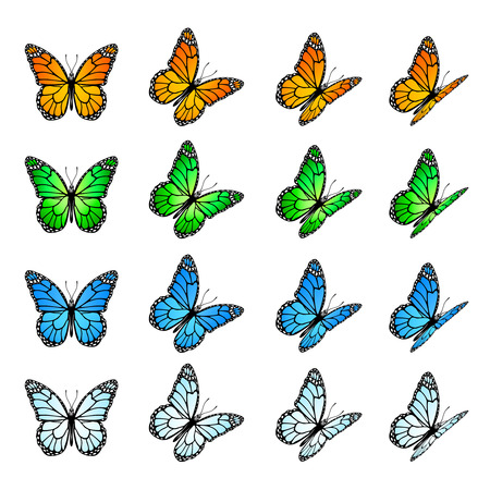 monarch butterfly: Set of colored butterflies isolated on a white background, illustration
