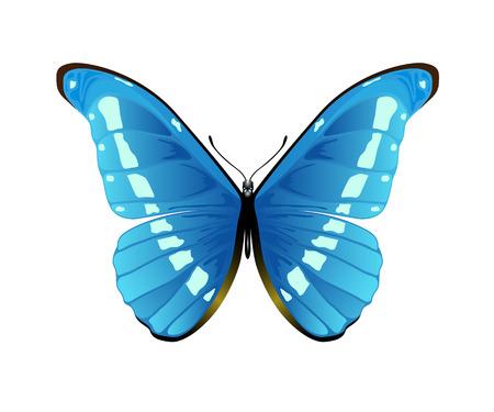 mariposa azul: Bonita mariposa azul aislado en un fondo blanco, ilustración Vectores