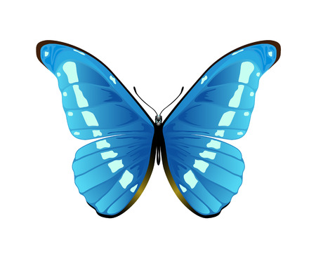Blue pretty butterfly isolated on a white background, illustration  Illustration