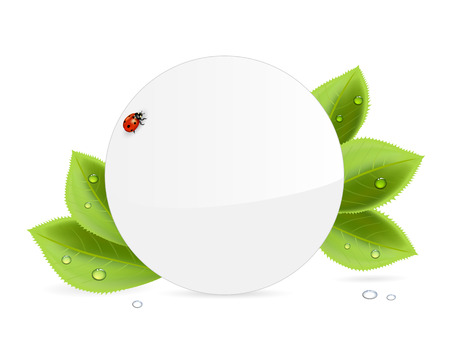 Circle paper card, ladybug and foliage with water drops, illustration  Vector