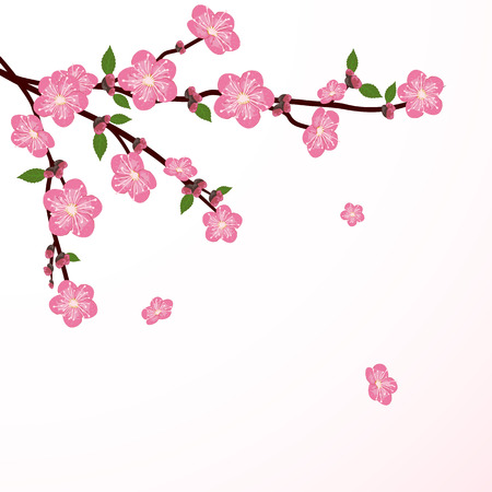 Cherry tree blossom with falling flower, illustration  Vector