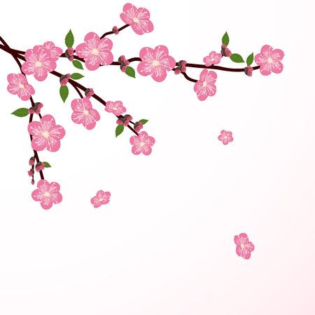 Kirschbaumblüte mit fallenden Blume, Illustration