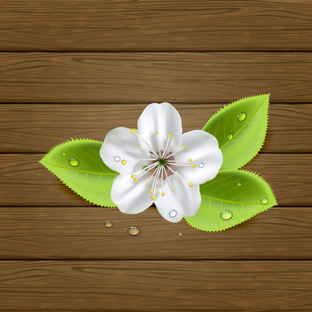 White flower with drops and foliage on wooden background, illustration  Vector