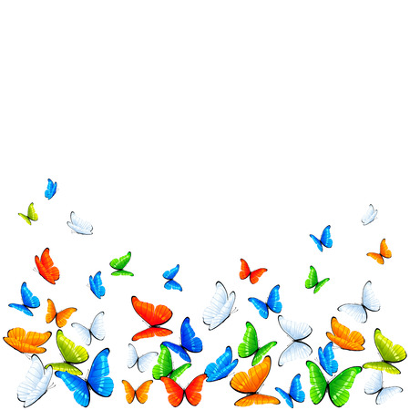 Colored butterflies flying on white background, illustration  Vector