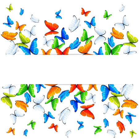 Multicolored butterflies flying on white background, illustration  Vector