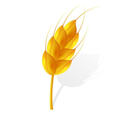 Ear of wheat isolated on white background, illustration.