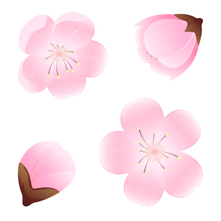 flower blooming: Set of flowers isolated on white background, illustration.