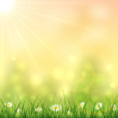 sun illustration: Nature background with flowers in the grass and Sun, illustration.