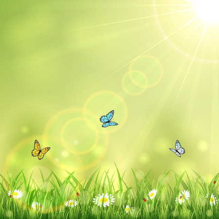 summer nature: Background with butterflies, summer nature with Sun and flowers in the grass, illustration. Illustration