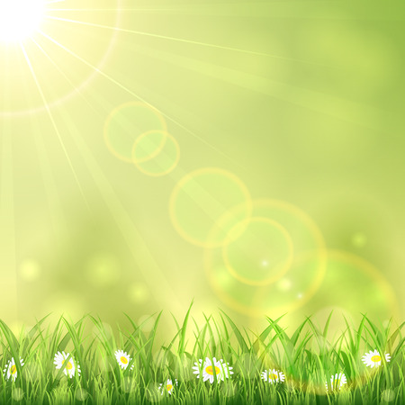 animal image: Nature background with the summer Sun and flowers in the grass, illustration.