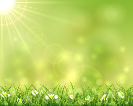 Sunny background with grass and flowers, illustration. Vector