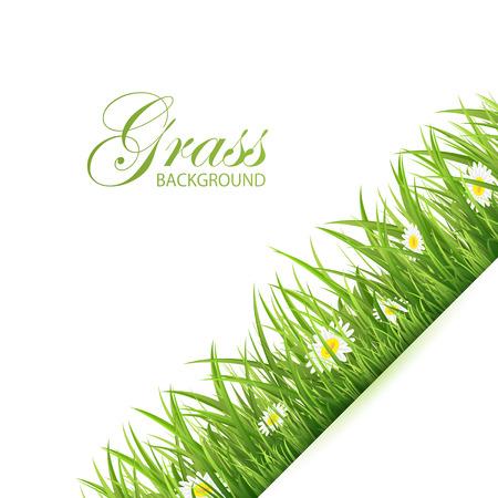 전원시의: 녹색 잔디와 꽃, 그림 추상적 인 배경입니다. 일러스트