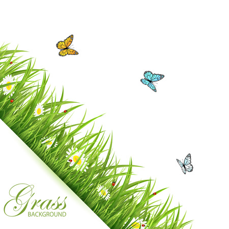 grass flowers: Abstract background with green grass, flowers, flying butterflies and ladybirds, illustration.