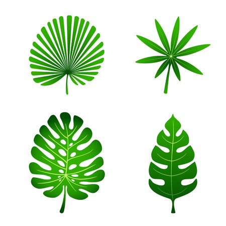 coconut leaves: Set of palm leaves isolated on white background, illustration.