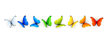 Set of colorful butterflies isolated on white background, illustration.