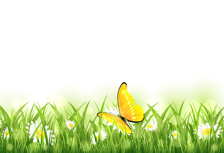 yellow butterfly: Yellow butterfly on white flowers in the grass, illustration.