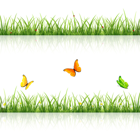 ladybird: Green grass with flowers, flying butterflies and ladybugs on white background, illustration. Illustration