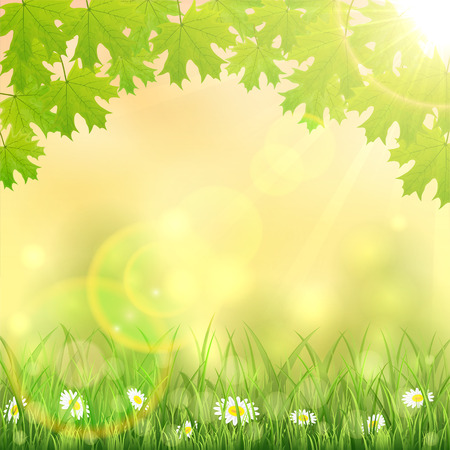 sun flowers: Spring nature background with flowers in the grass, maple leaves and Sun, illustration.