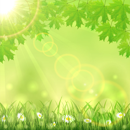 sun flowers: Summer green nature background with flowers in the grass, maple leaves and Sun, illustration.