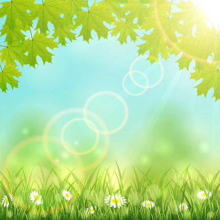 sun flowers: Nature background with flowers in the grass, maple leaves and Sun, illustration.