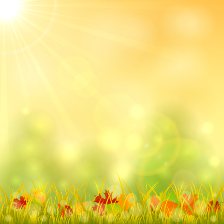 bright sun: Autumn background with fallen leaves in the grass and bright sun in the sky, illustration. Illustration