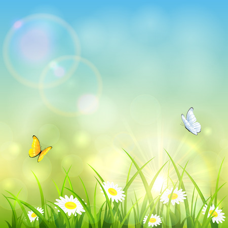 sun flowers: Grass with flowers and flying butterflies on the background of a shining sun, illustration