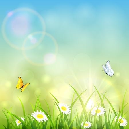 Herbe avec des fleurs et des papillons qui volent sur le fond d\u0027un soleil
