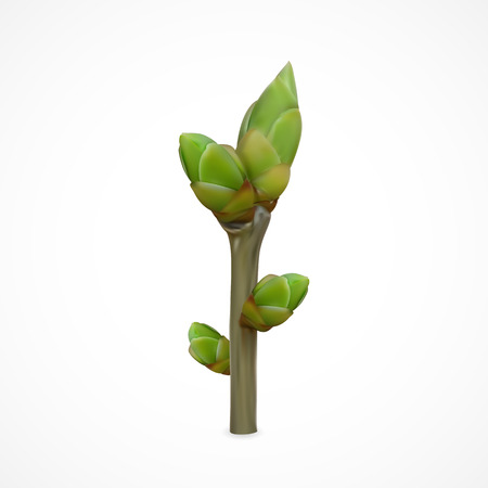 twigs: Spring twig with buds isolated on white background, illustration. Illustration